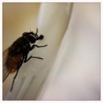 Hipstamatic_Olloclip_Macro_Fly_02